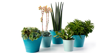 plant_pots_indoors